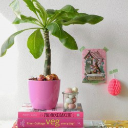 #urbanjunglebloggers plants on the workplace