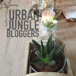 #urbanjunglebloggers in cafés shops restaurants