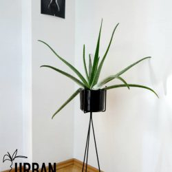 #urbanjunglebloggers watering plants