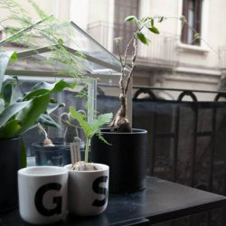#urbanjunglebloggers balcony or windowsill