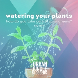 July 2014 – Watering your plants!
