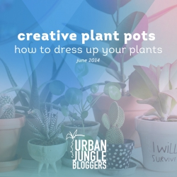 June 2014 Creative plant pots – how to dress up your plants
