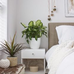 #urbanjunglebloggers cosy green bedroom