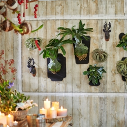 Urban Jungle Bloggers Festive Plants