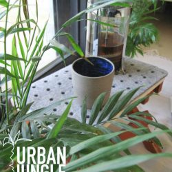 urbanjunglebloggers, plants, coffee