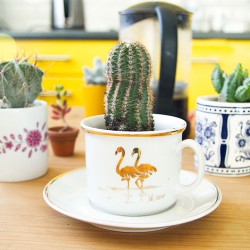 #urbanjunglebloggers plants & coffee