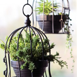 Urban Jungle Bloggers in February: Hanging Planters