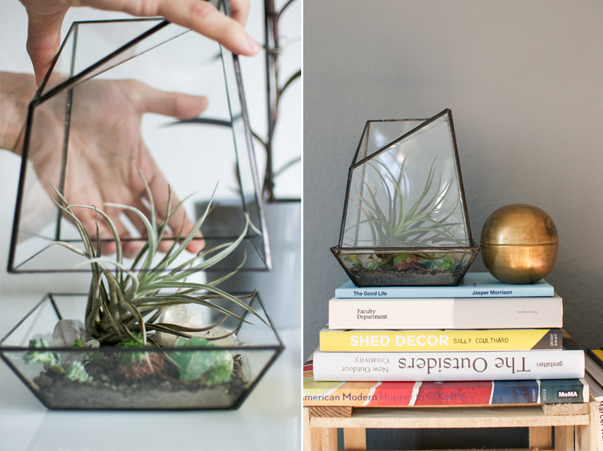 Urban Jungles glass terrarium giveaway