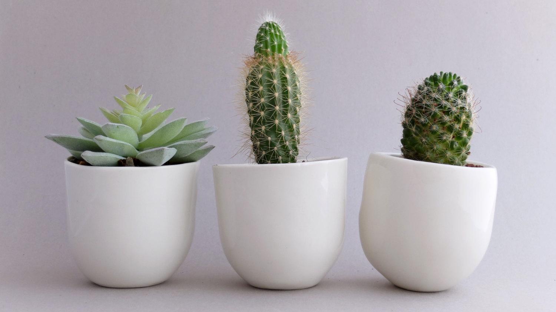 Cacti love story 3