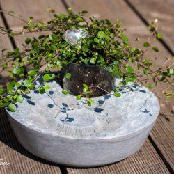 urbanjunglebloggers, plant gift, plants