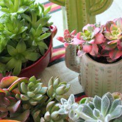 urbanjunglebloggers, plant gang, plantgang