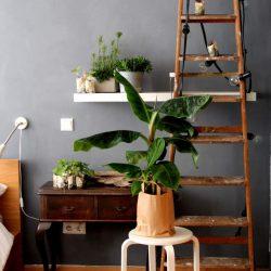 urbanjunglebloggers, plantgang, plant gang