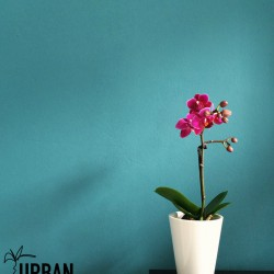 Urban Jungle Bloggers #Plantcolorpop