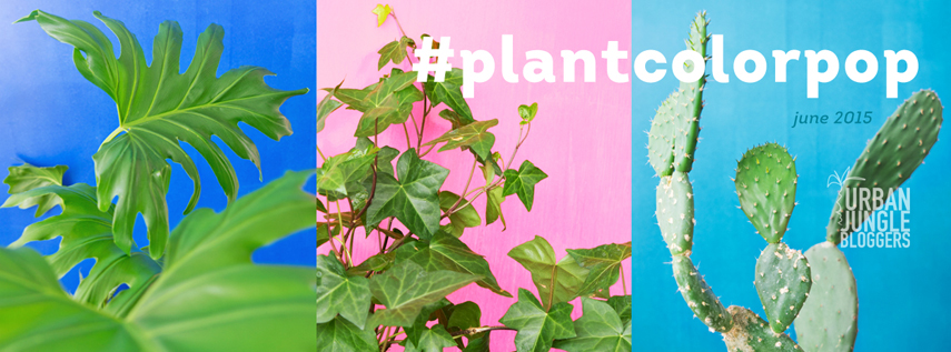 Urban Jungle Bloggers Plantcolorpop