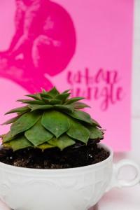 Urban Jungle Bloggers #Plantcolorpop