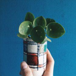 urbanjunglebloggers, plantcolorpop