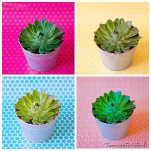 urbanjunglebloggers, plantcolorpop, plants, color
