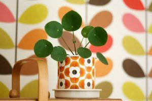 urbanjunglebloggers, plantcolorpop, plants