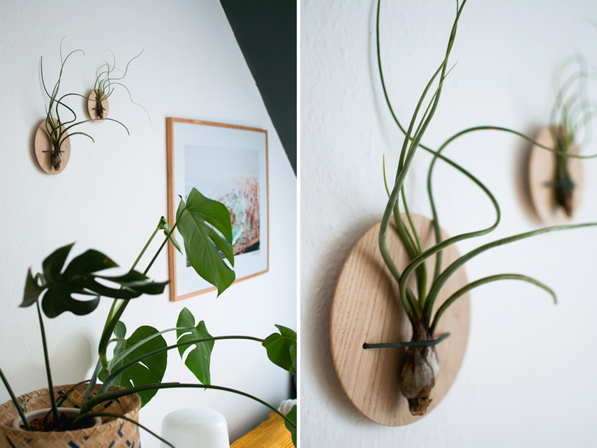Urban Jungle Bloggers Etairnity Airplants giveaway