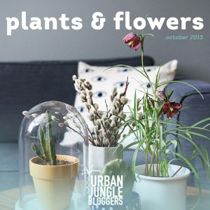 Urban Jungle Bloggers: Plants and Flowers