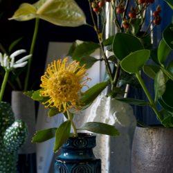 urbanjunglebloggers, plants, flowers