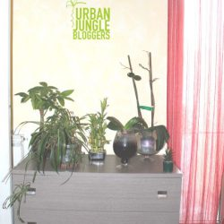 Urban Jungle Bloggers #plantshelfie
