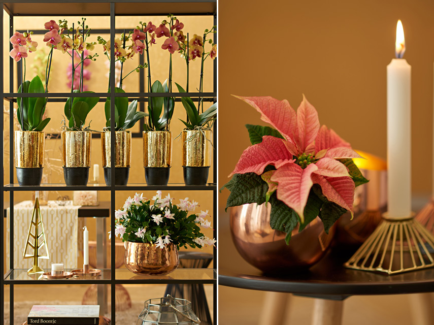 Urban Jungle Bloggers Festive Decor Ideas with plants - Eco Luxe
