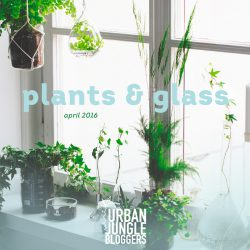 Urban Jungle Bloggers in April 2016: Plants & Glass