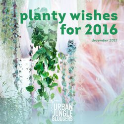 December 2015: Planty Wishes for 2016