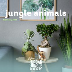 February 2016: Jungle Animals