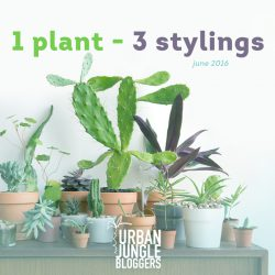 June 2016: One Plant – Three Stylings