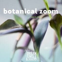 March 2016: Botanical Zoom