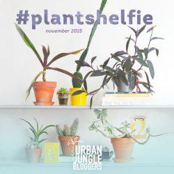 November 2015: #Plantshelfie