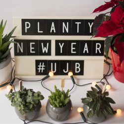 Urban Jungle Bloggers - Planty Wishes for 2016