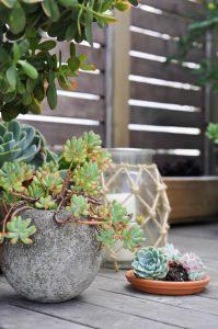urbanjunglebloggers, planty wishes