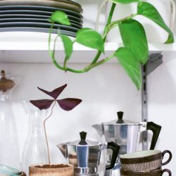 urbanjunglebloggers, kitchen greens