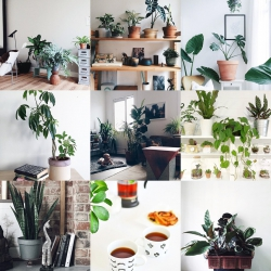 Urban Jungle Bloggers Houseplant Appreciation Day