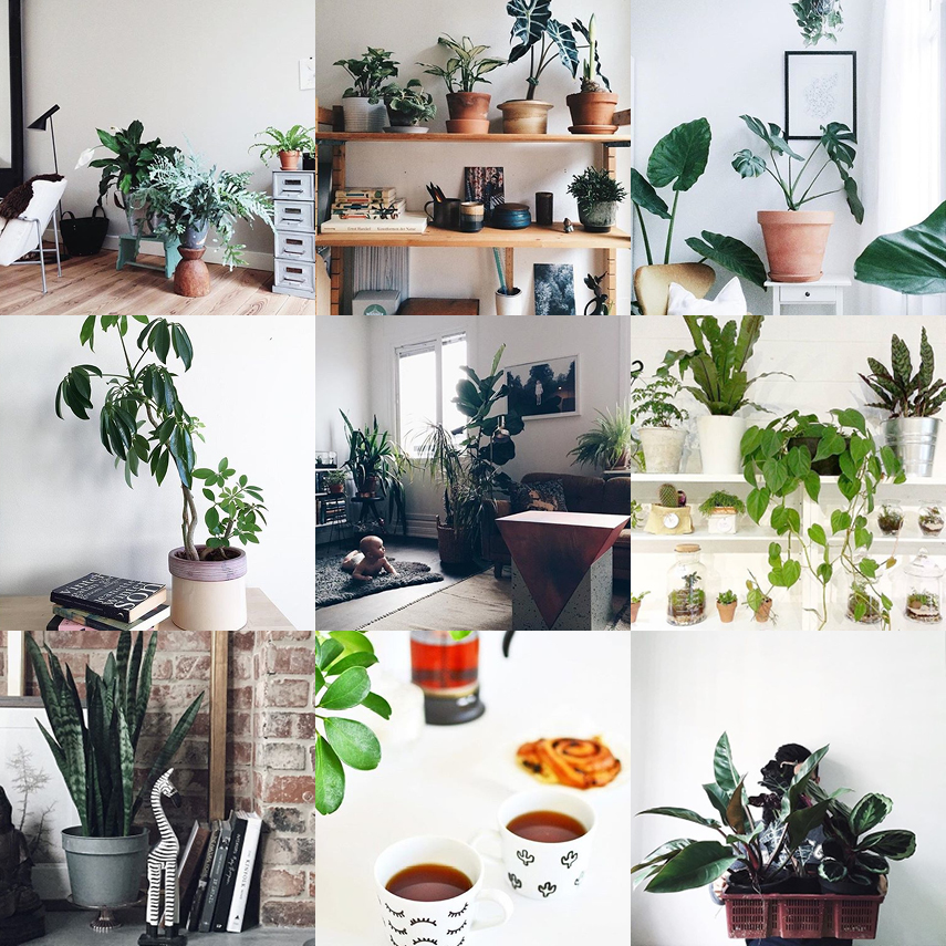 Urban Jungle Bloggers - Houseplant Appreciation Day