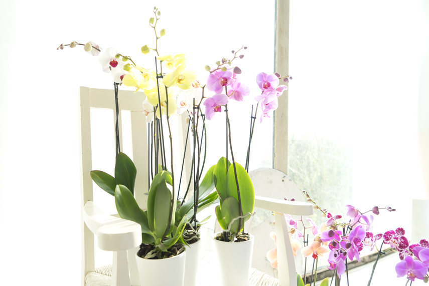 Urban Jungle Bloggers - America's Next Plant Model - orchids