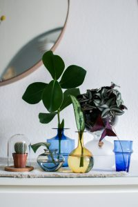 urbanjunglebloggers, plants and glass