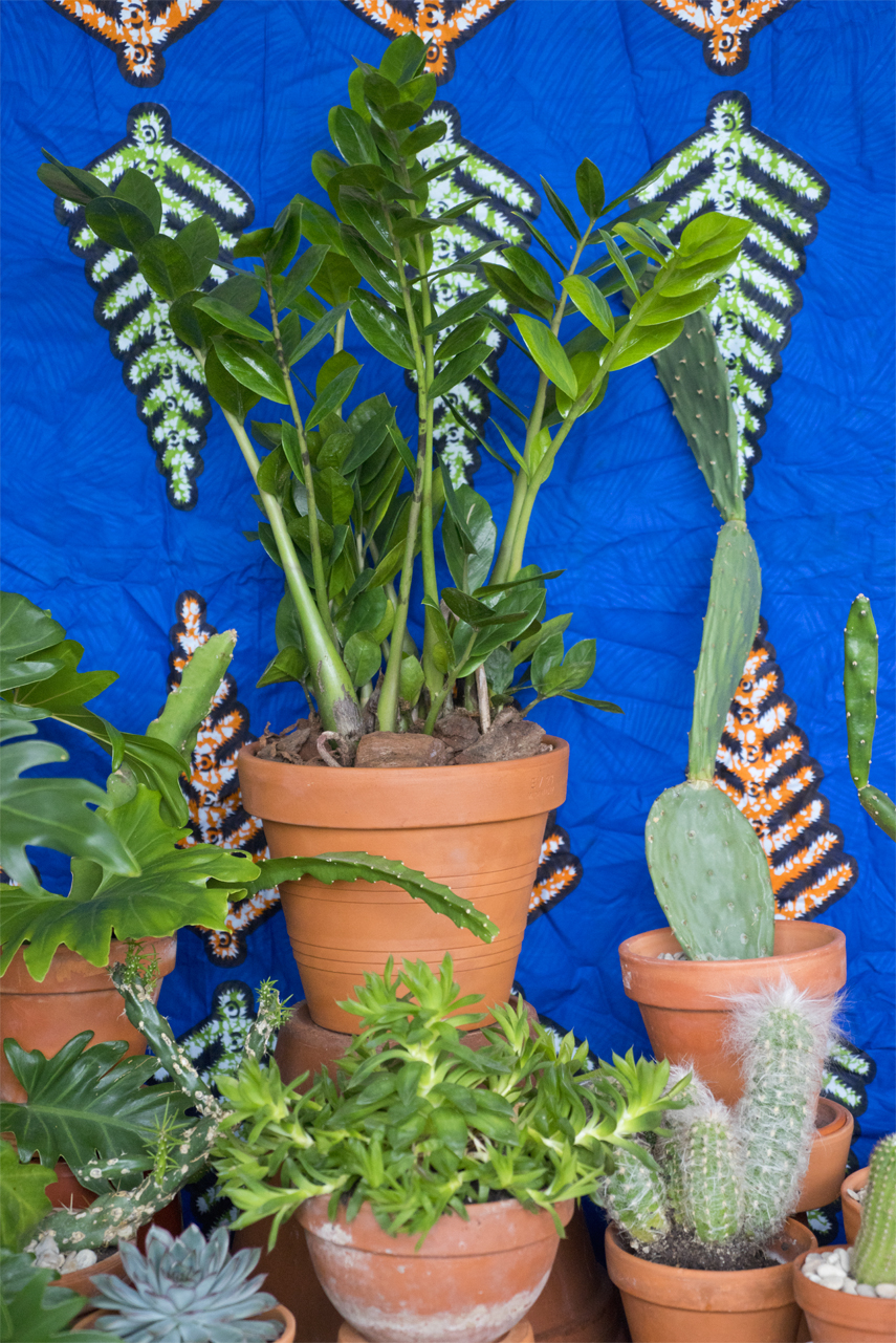 Houseplant of the month June: Zamioculcas by Urban Jungle Bloggers