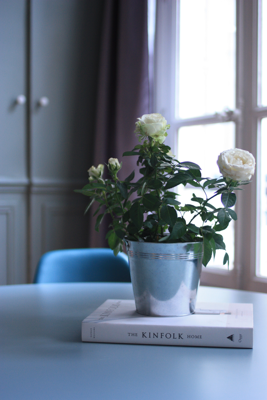 Urban Jungle Bloggers Houseplant of the Month July: Potted Rose