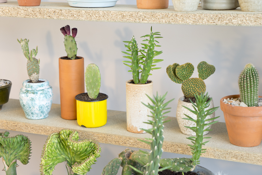Urban Jungle Bloggers Houseplant of the Month August: Cactus