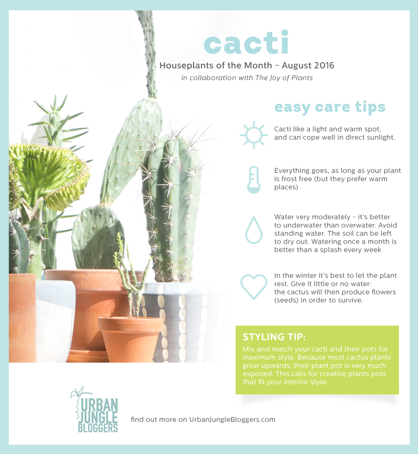 Urban Jungle Bloggers Houseplant of the Month August: Cacti
