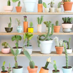 Urban Jungle Bloggers - Houseplant of the month: cacti