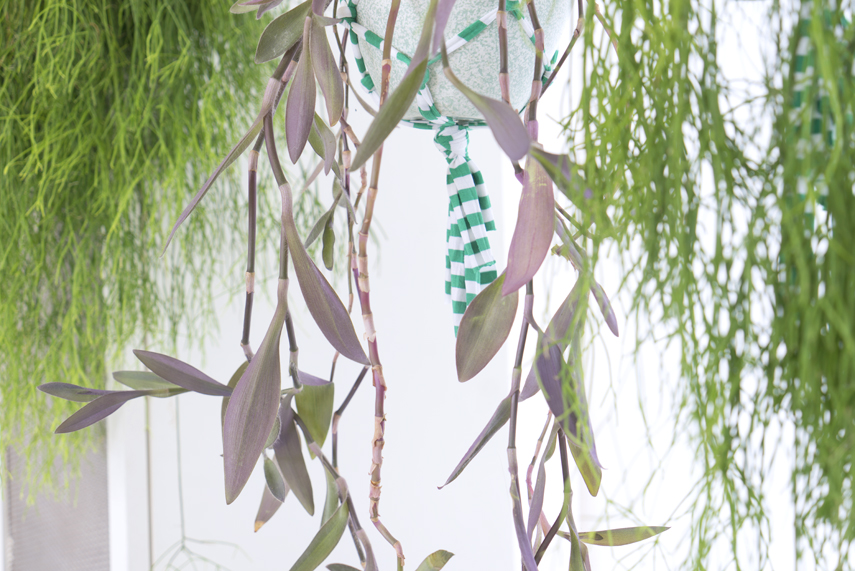 Urban Jungle Bloggers   Houseplant Of The Month: Hanging Plants Part 64