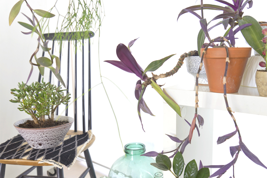 Urban Jungle Bloggers - Houseplant of the Month: hanging plants