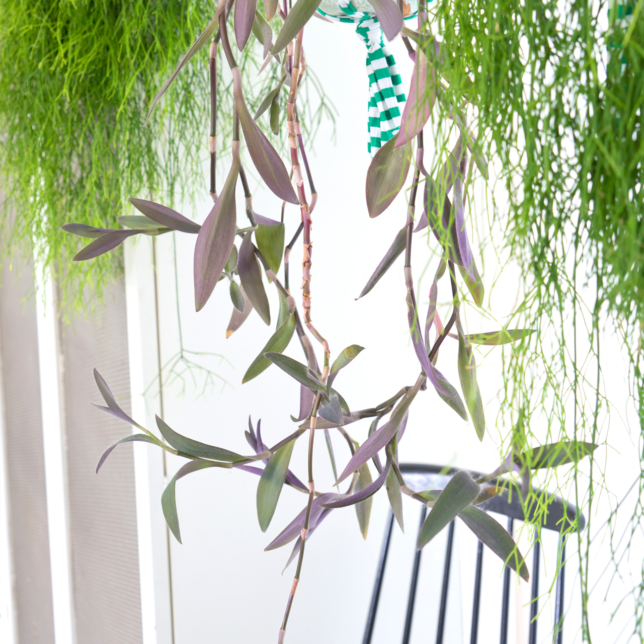 Houseplants Of The Month September Hanging Plants