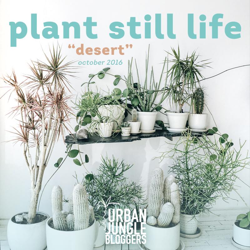 Urban Jungle Bloggers in October: Plant Still Life: desert