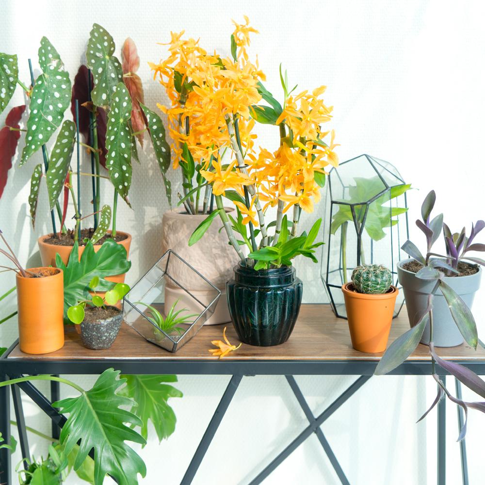 urbanjunglebloggers-orchids-featured